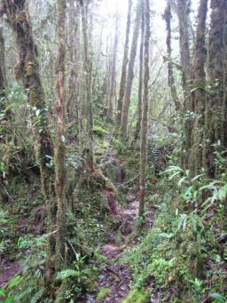 Camp3_Mulu_foresta