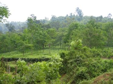Assam 5