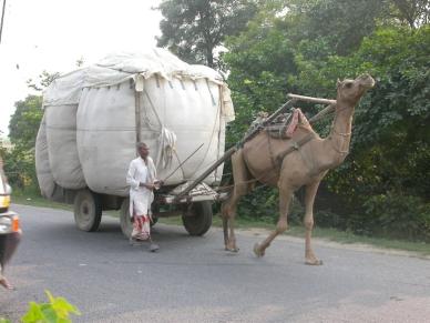 CamelCart4