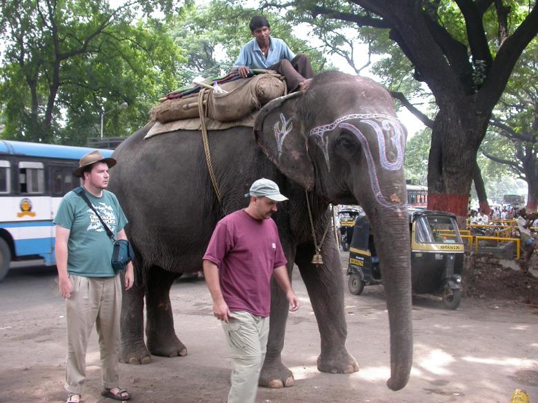 Elephant6