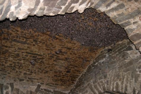 Bats in fort 3
