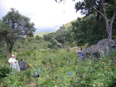 Drakensburg 16