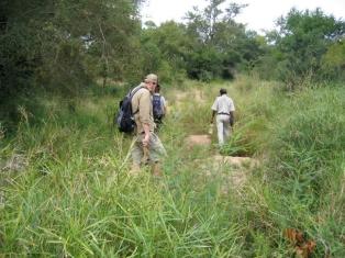Kruger 5