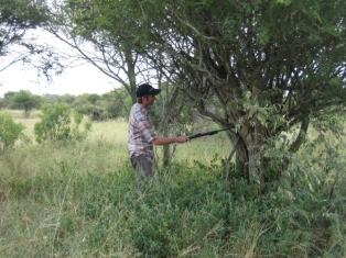 Kruger 6