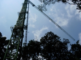 Malaysia-crane-033