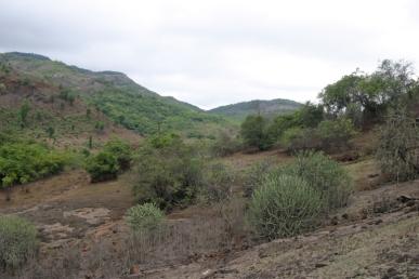 Mulshi Forest 2