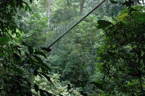 Mulu Canopy Walk1