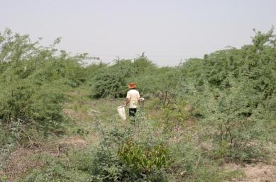 Tamil Nadu 2